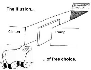 sheep-choose-path-clinton-trump-to-slaughter