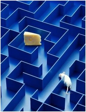 Image result for maze with cheese