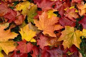 Image result for image of autumn leaves